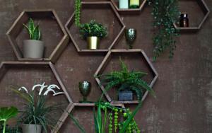 decora una estanteria con plantas