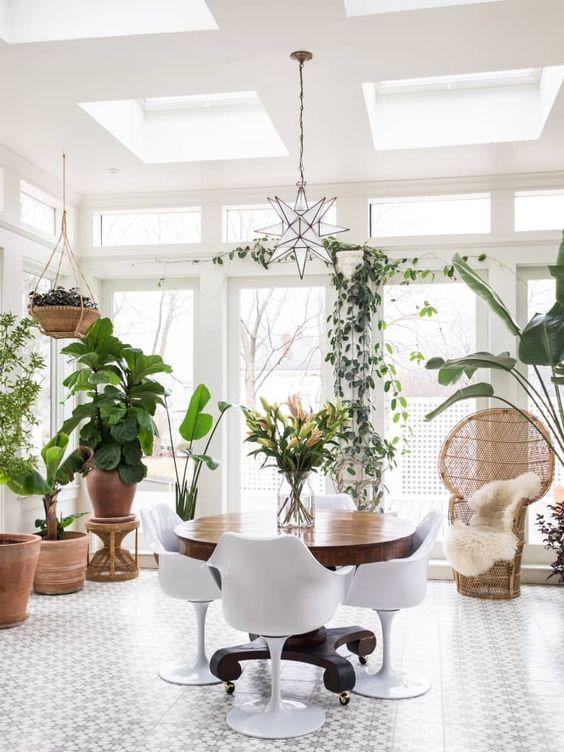 Plantas de interior para la sala