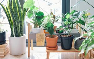 decora tu salón con plantas naturales