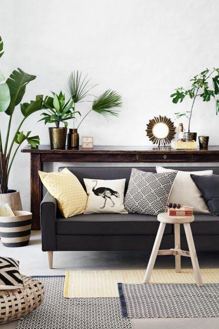 plantas para salones tropicales