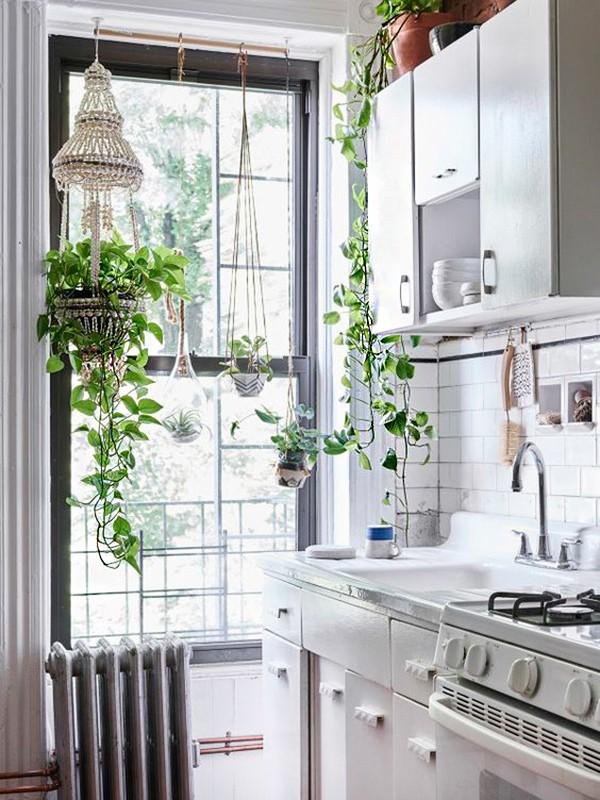 cocinas pequeñas con plantas colgantes