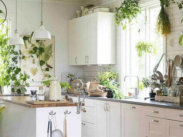 cocinas pequeñas con muchas plantas