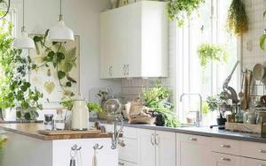 decoracion de cocinas pequeñas con plantas