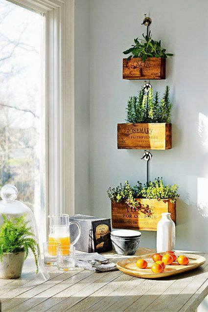plantas para adornar la cocina
