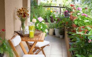 Decorar terrazas y balcones con plantas