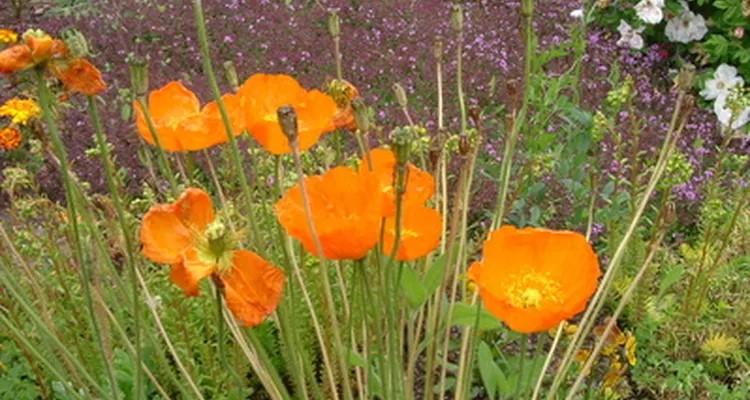 decorar patios pequeños sin césped con flores silvestres