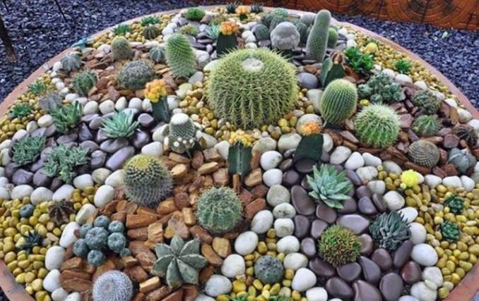 Jardines pequeños y sencillos con piedras con cactus