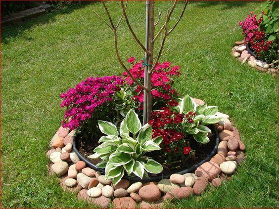 Pequeño árbol rodeado de piedras en un jardín pequeño