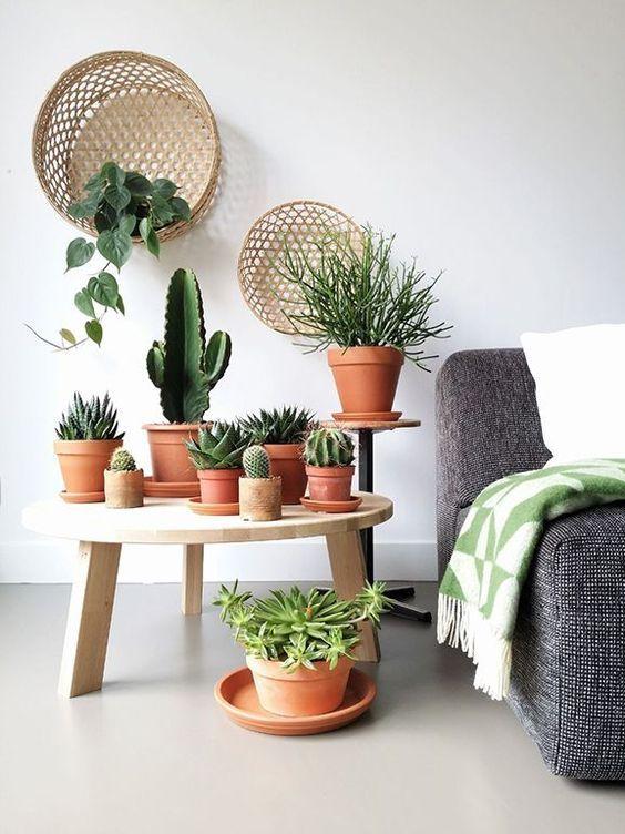 Cactus y Suculentas, perfectas para un salón