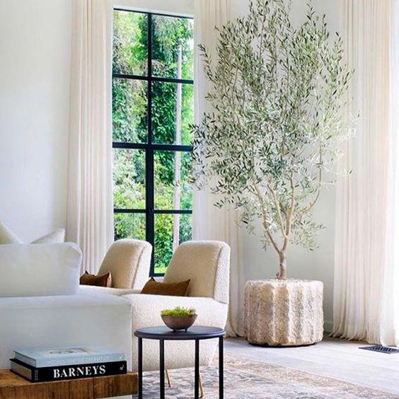 Árbol de Olivo en el salón