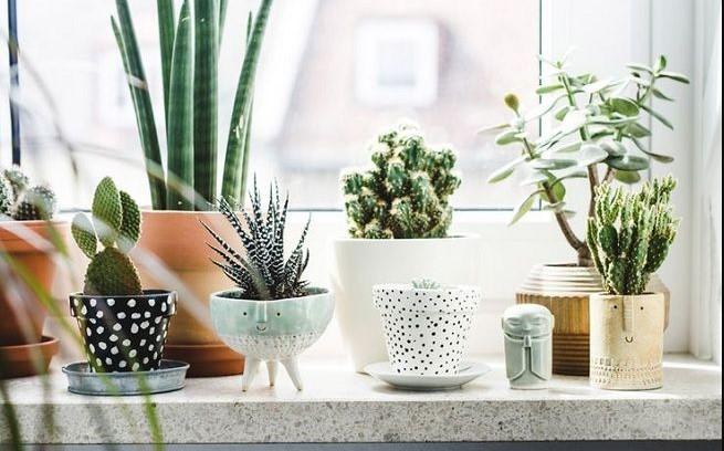 Plantas suculentas para cocinas modernas