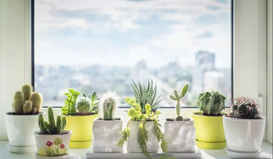 Plantas cactus para decorar cocinas modernas