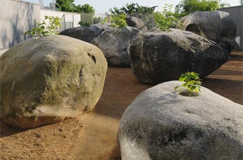 enraizado en piedras grandes decoradas