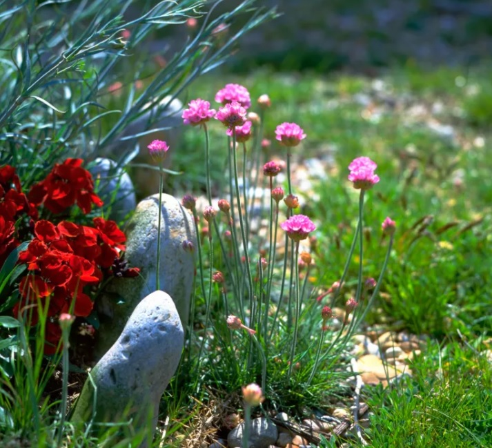 plantas de costa hacen un buen equipo con los jardines pequeños modernos de piedra