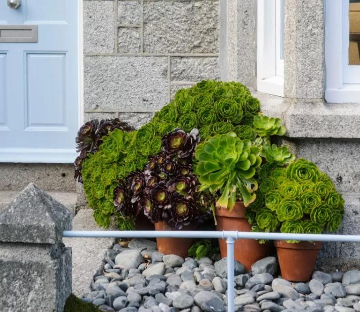Un jardín pequeño con piedras decorativas