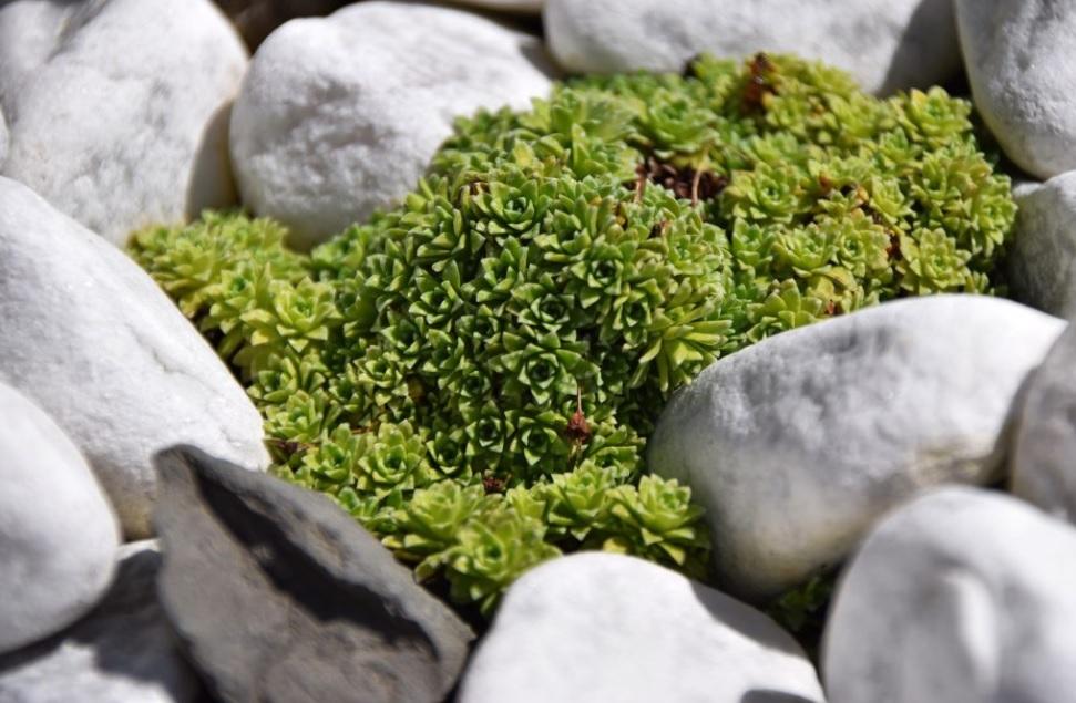 rocas pequeñas para un jardín pequeño