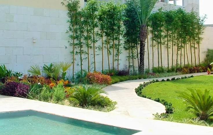 Paredes decoradas con plantas para jardín