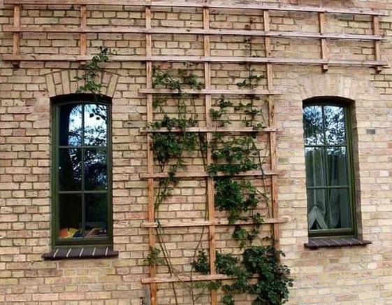 Paredes decoradas con enredaderas para jardín