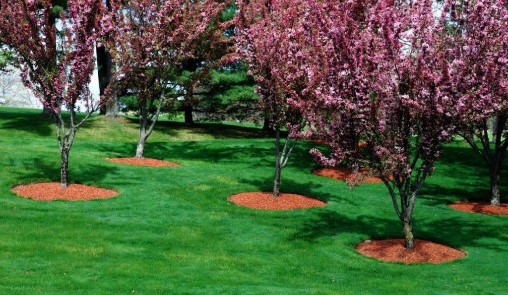 decoración de jardines con mulch y arboles