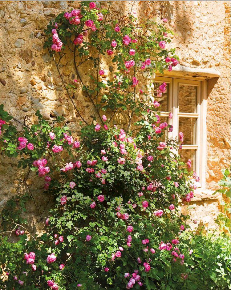 Pared exterior con plantas estilo Antiguo y rústico