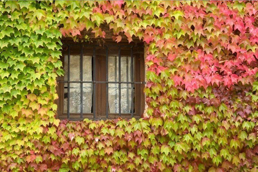 Pared exterior con plantas y color