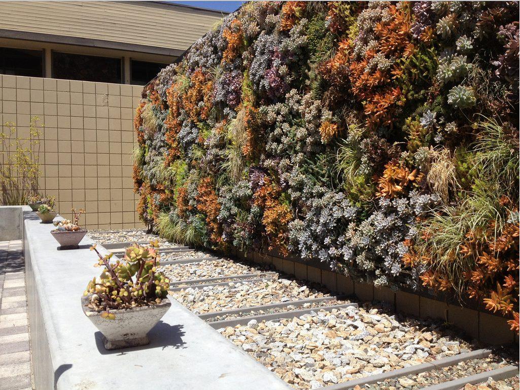 pared exterior de piedras con plantas  multicolor
