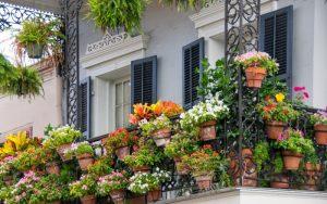 decoración de balcón con plantas